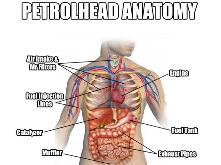 petrolheads anatomy