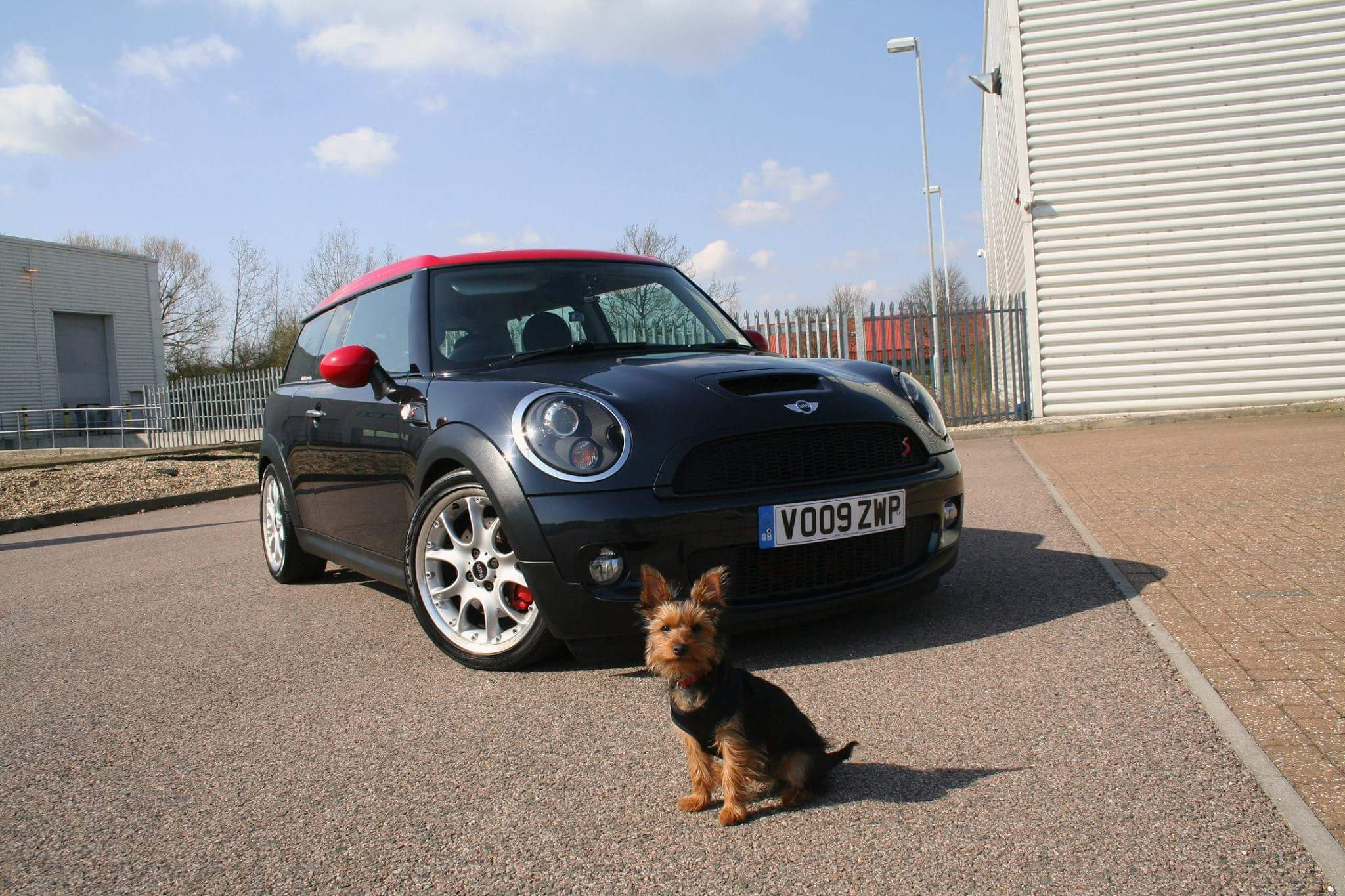 Photoshoot With My Clubman And Dog
